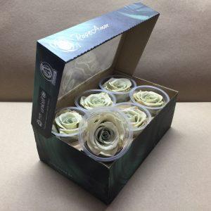 Preserved Roses Wht/Blue